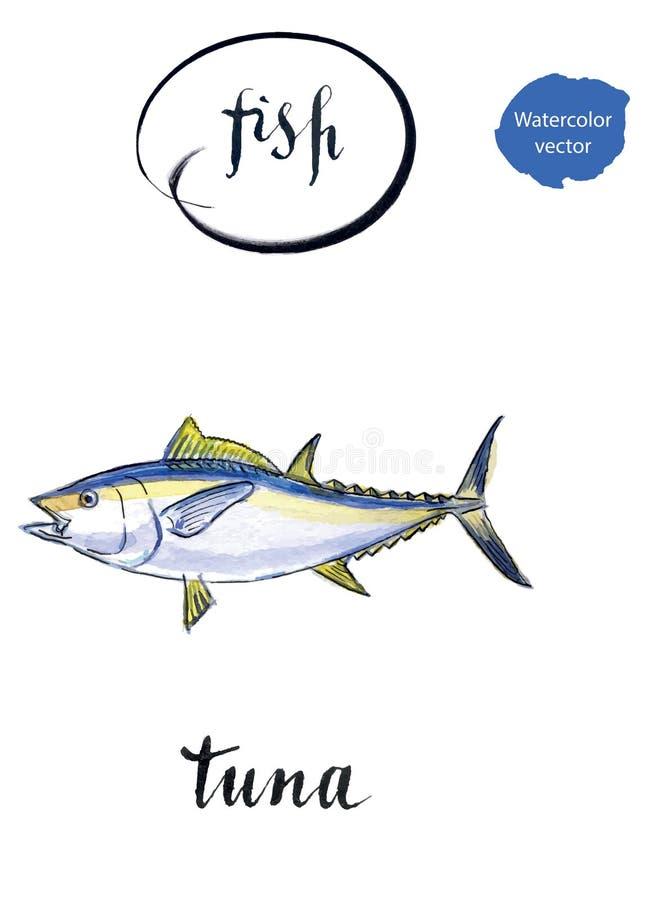 Tonfisk för havsfisk stock illustrationer