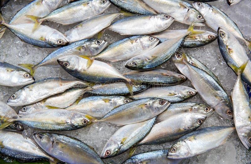 tonfisk f?r ny marknad f?r fisk Ny makrillfisk p? den havs- marknaden, traditionell fisk i marknad slapp fokus royaltyfri foto