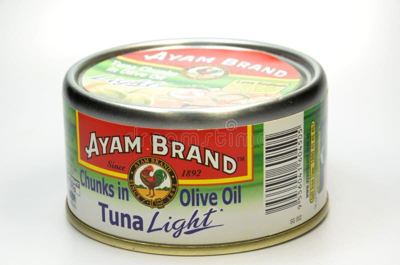 Tonfiskfisk av Ayam Brand arkivbild