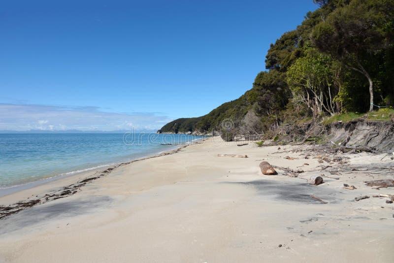 Tonga-Steinbruchstrand in Abel Tasman National Park, Neuseeland lizenzfreie stockbilder