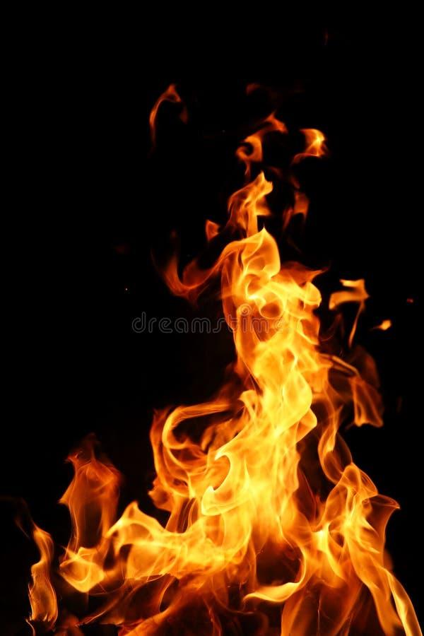 Tongen van vlam van brand van oranjegele kleur van het branden van spar stock foto