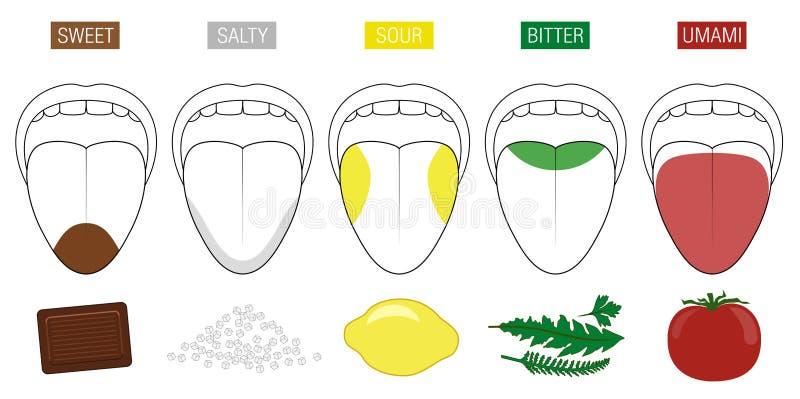 Tongue Taste Areas Food Illustration royalty free illustration