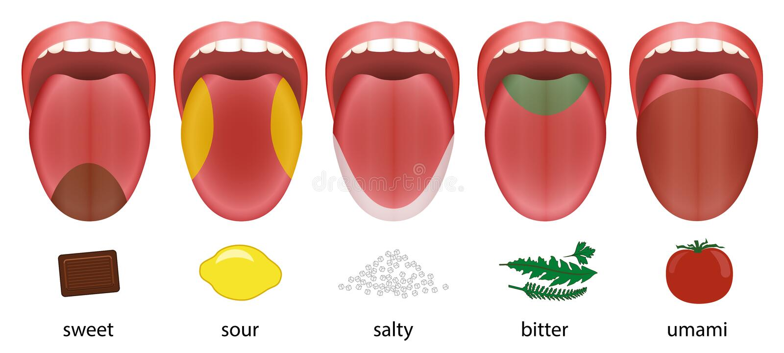 Tongue Taste Areas Sweet Sour Salty Bitter Umami. Tongue with five taste areas sweet, sour, salty, bitter and umami represented by chocolate, lemon, salt, herbs stock illustration