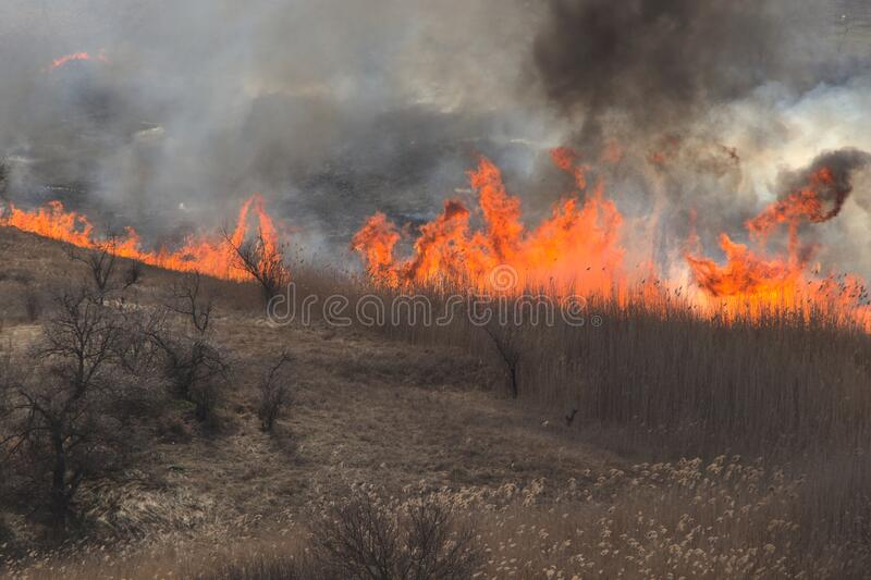 Tongues of orange dance, in the open air. A flaming meadow with grass, in a wasteland. Black and white tangles of smoke from the fire stock photo