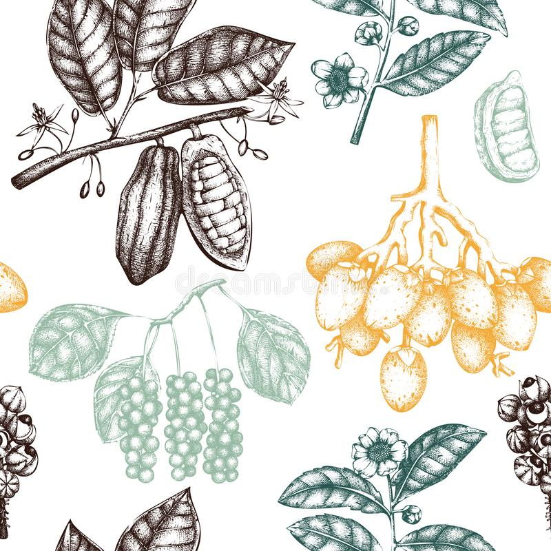 Vector background with tonic and spicy plants. Hand drawn seamless pattern with spices illustrations. Vintage aromatic elements. S vector illustration