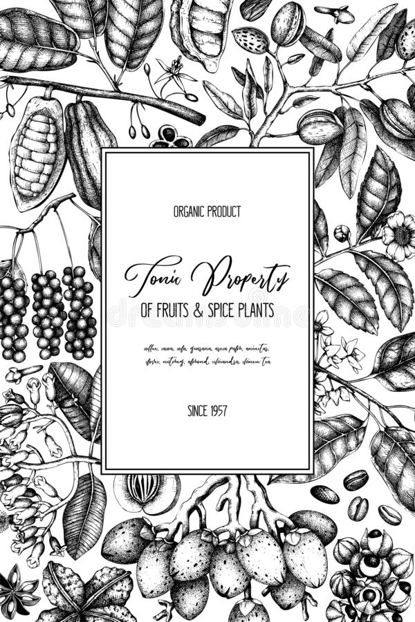 Vector design template with tonic and spicy plants. Hand drawn spices illustrations. Vintage frame with aromatic elements. Perfume stock illustration