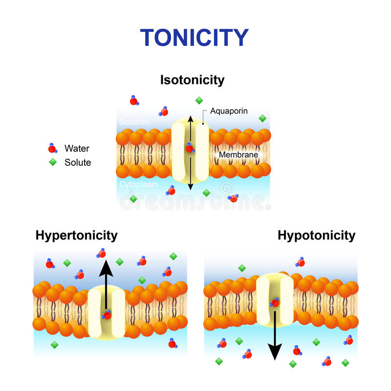 Tonicity i osmoza Komórki błona i aquaporin ilustracja wektor