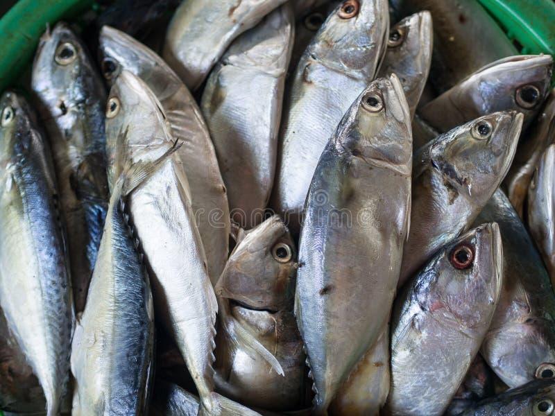 tonijn royalty-vrije stock fotografie