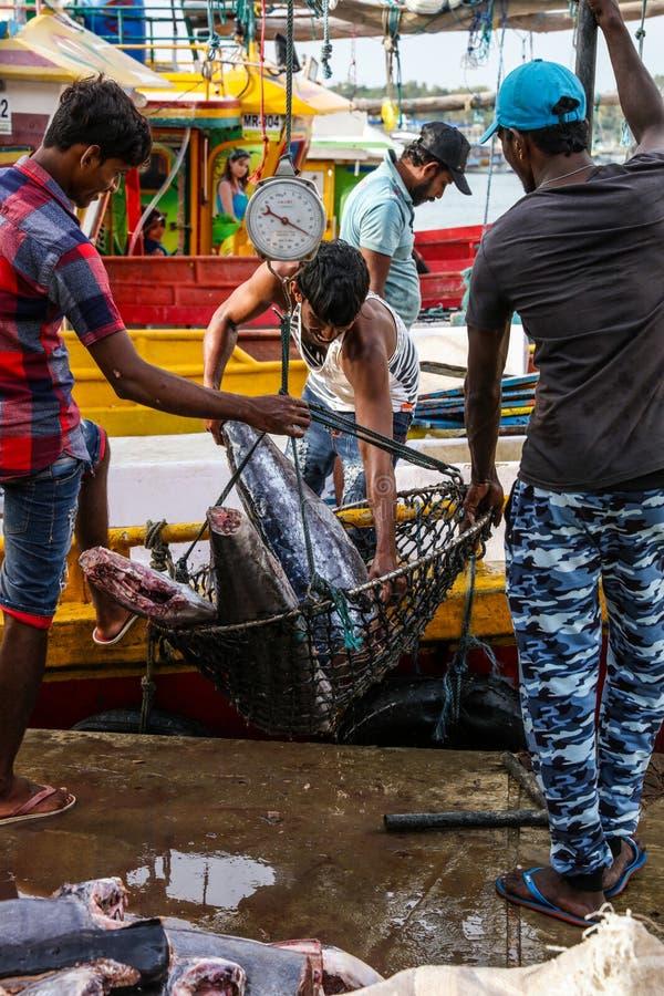 Tonijnvissen die van boten in Mirissa-Haven, Sri Lanka brengen te landen royalty-vrije stock fotografie