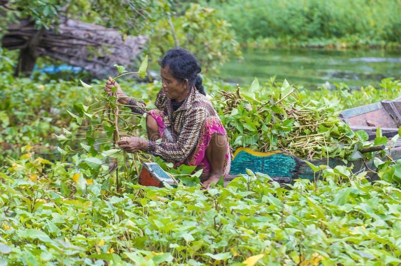 Tonle aproszy jezioro Kambodża obraz stock