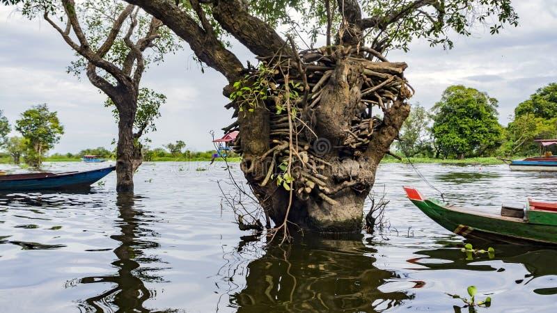 Tonle Sap湖,村庄 库存图片
