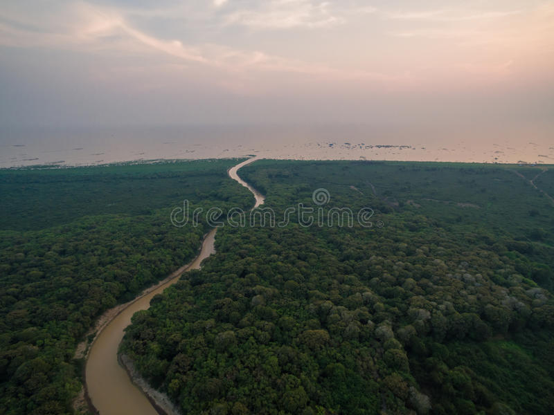 Tonle Sap lake. Forest near Tonle Sap lake (Cambodia stock photos