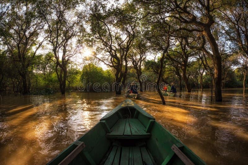 Tonle underminerar mangroven Forest Canoe royaltyfri bild