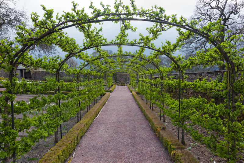 Tonnelle aux jardins d'Aberglasney, Carmarthanshire, Pays de Galles image stock