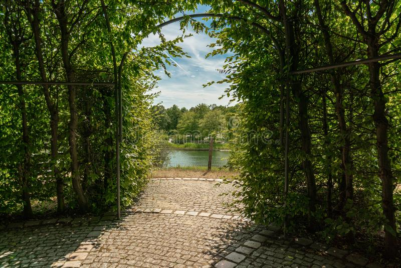 Tonnelle des branches et des feuilles de hêtre avec la vue sur un lac photos libres de droits