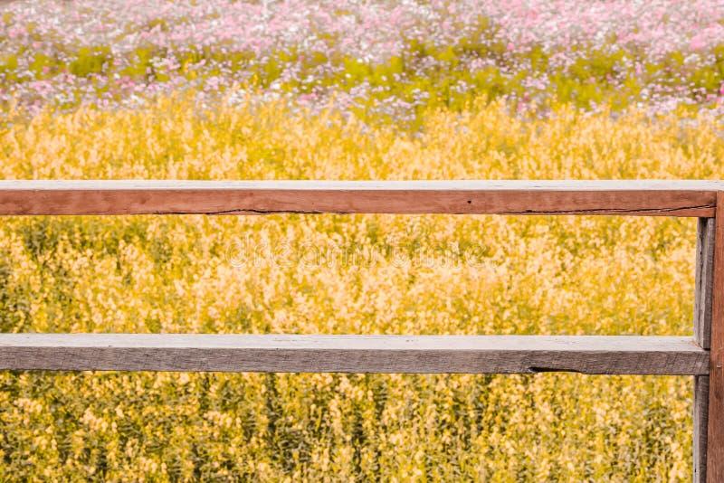 Tono del vintage de la terraza de madera en fondo del campo de flor foto de archivo