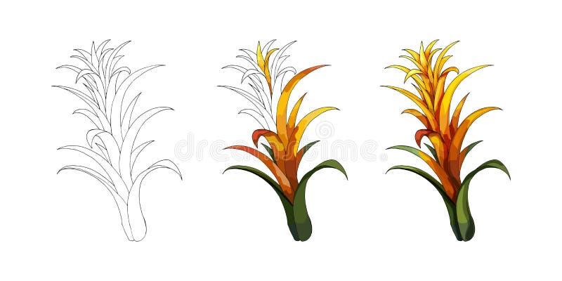 Tono medio de la historieta con la flor tropical del lirio La mano del vector ahoga bosquejo coloreado imágenes de archivo libres de regalías