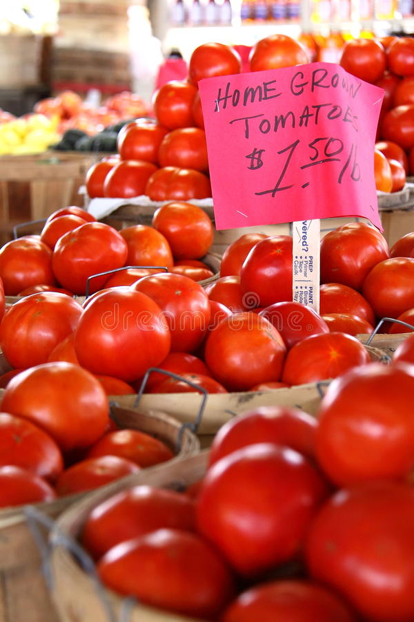 Tons av hemmet - fullvuxna tomater royaltyfria foton