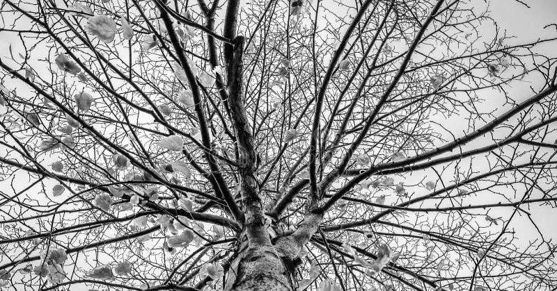 Tons fendus d'arbres d'art abstrait nu noir et blanc de photographie photos libres de droits