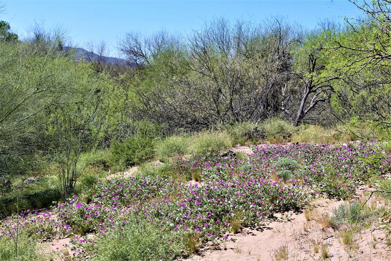 Tonto国家森林,Salt河度假区,美国农业部美国林业局,亚利桑那,美国 库存图片