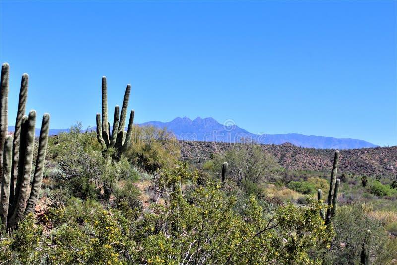 Tonto国家森林,Salt河度假区,美国农业部美国林业局,亚利桑那,美国 免版税库存图片