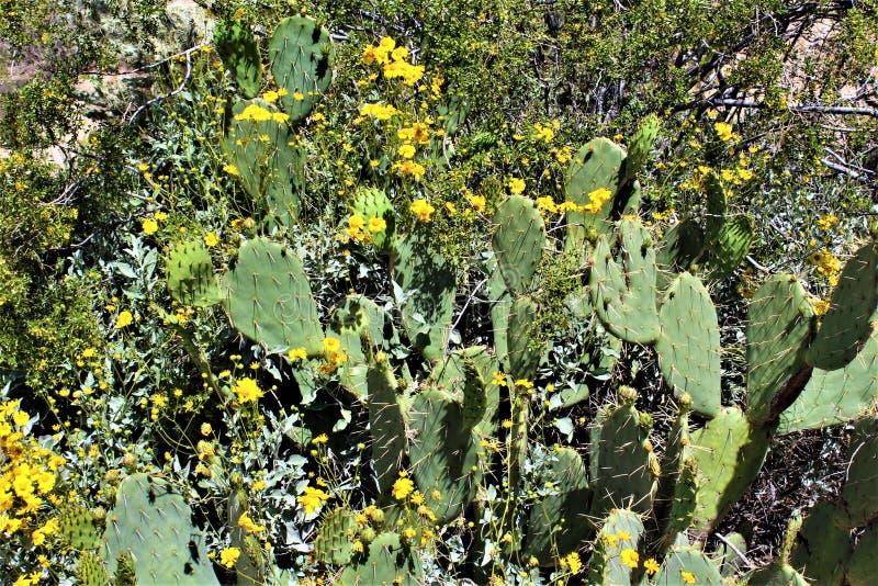 Tonto国家森林,Salt河度假区,美国农业部美国林业局,亚利桑那,美国 图库摄影