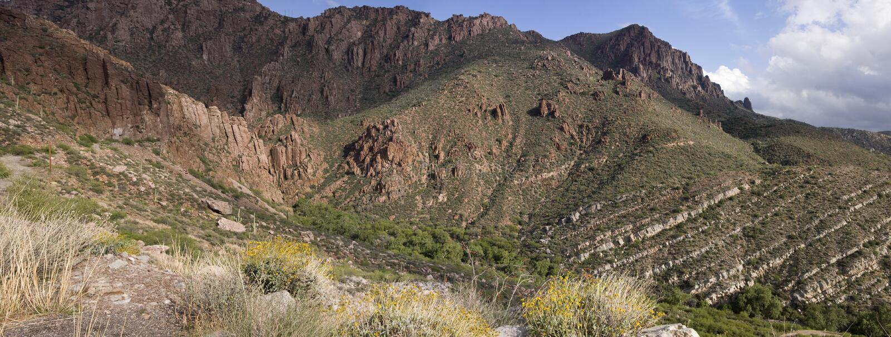tonto национального парка пущи Аризоны стоковое изображение