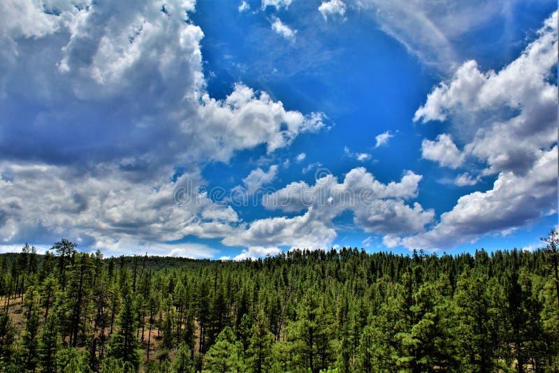Tonto las państwowy, Arizona, Stany Zjednoczone departament rolnictwa zdjęcia stock