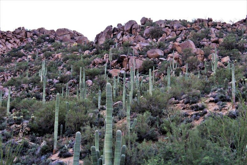 Tonto las państwowy, Arizona U S Departament Rolnictwa, Stany Zjednoczone obrazy stock