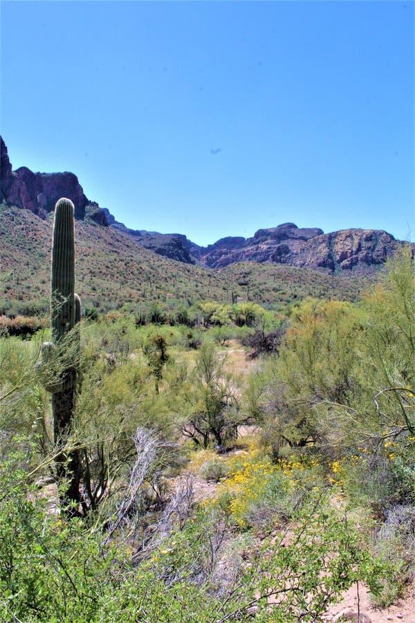 Tonto las państwowy, Solankowy Rzeczny Rekreacyjny teren, Stany Zjednoczone departament rolnictwa służby leśne, Arizona, Stany Zj zdjęcie royalty free
