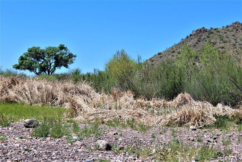 Tonto las państwowy, Solankowy Rzeczny Rekreacyjny teren, Stany Zjednoczone departament rolnictwa służby leśne, Arizona, Stany Zj fotografia stock