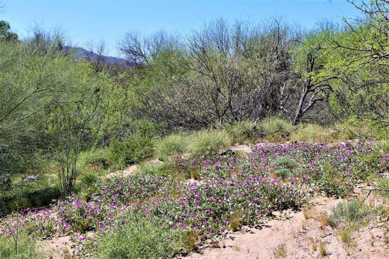 Tonto las państwowy, Solankowy Rzeczny Rekreacyjny teren, Stany Zjednoczone departament rolnictwa służby leśne, Arizona, Stany Zj obrazy stock