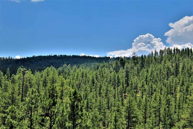 Tonto nationalskog, Arizona U S Jordbruksavdelningen Förenta staterna royaltyfri fotografi