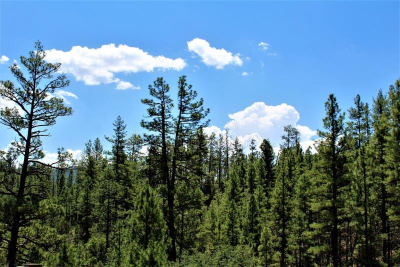 Tonto nationalskog, Arizona U S Jordbruksavdelningen Förenta staterna arkivfoton
