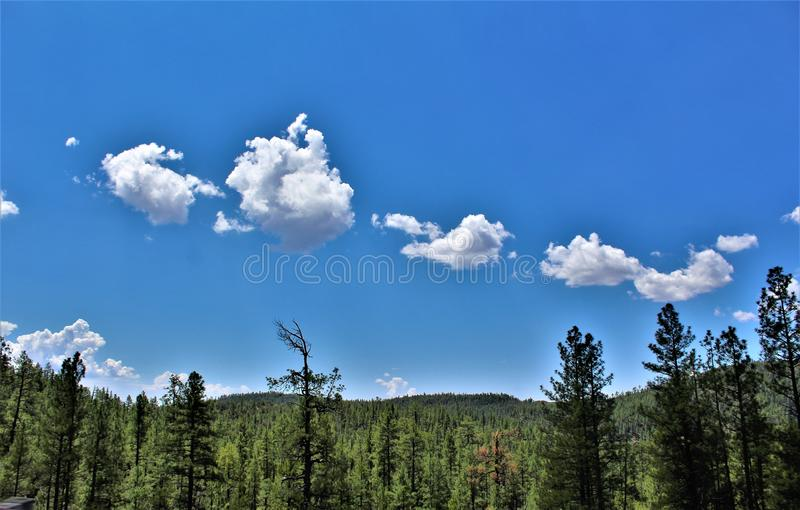 Tonto nationalskog, Arizona U S Jordbruksavdelningen Förenta staterna arkivfoto