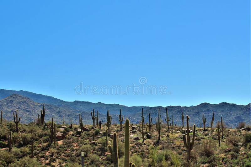 Tonto nationalskog, av huvudväg 87, Arizona U S Jordbruksavdelningen Förenta staterna arkivbilder