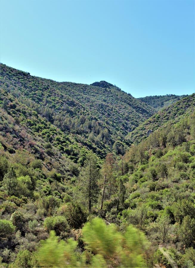 Tonto nationalskog, av huvudväg 87, Arizona U S Jordbruksavdelningen Förenta staterna fotografering för bildbyråer