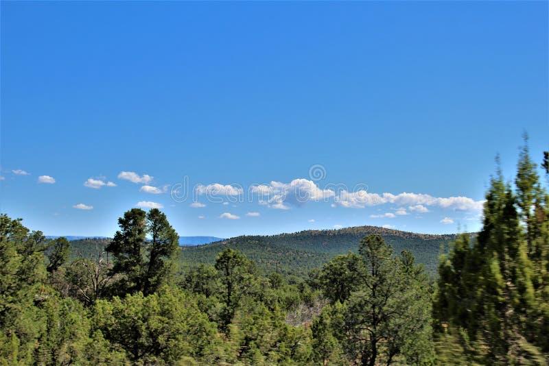 Tonto nationalskog, av huvudväg 87, Arizona U S Jordbruksavdelningen Förenta staterna royaltyfria bilder