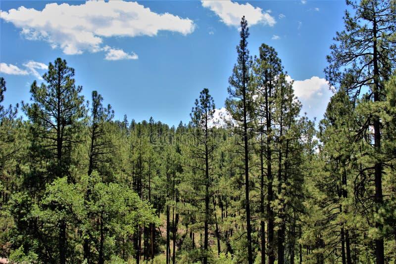 Tonto-staatlicher Wald, Arizona U S Landwirtschaftsministerium, Vereinigte Staaten stockbild