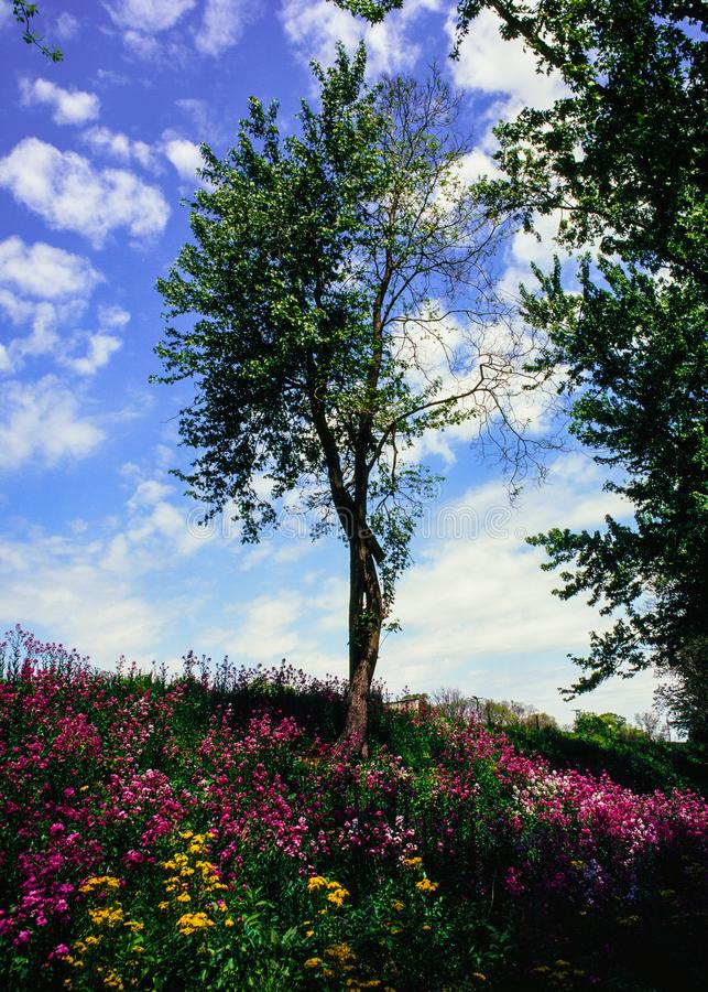 Too much color for one place. A scrawny and twisted tree is the centerpiece of this photo. Large amounts of colorful flowers are in bloom below, while a complex stock images