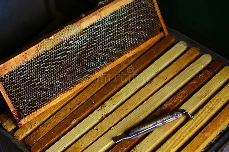 Tools for beekeeping and honey accessories. frame with bees wax structure full of fresh bee honey in honeycombs. Top view. Copy sp stock photo