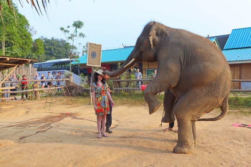 Toon met olifanten voor toeristen in Thailand stock afbeeldingen