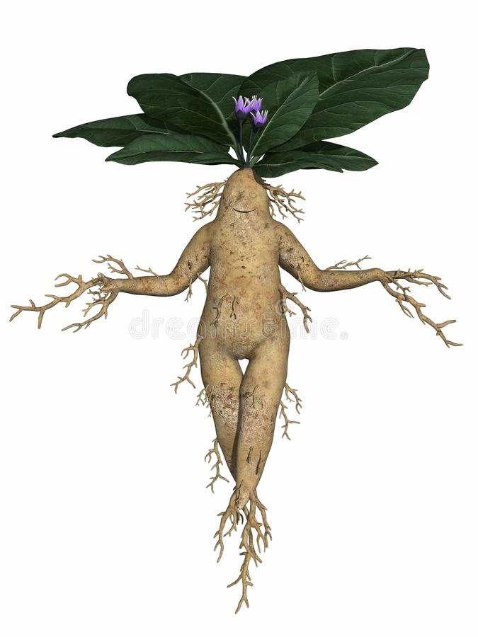 Download Toon root tuber stock illustration. Image of food, illustration - 20015022