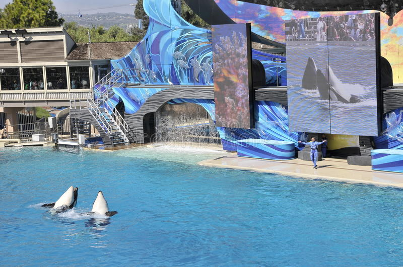 Toon in Seaworld, San Diego stock afbeelding