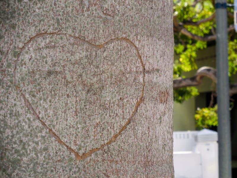 Toon uw liefde stock fotografie