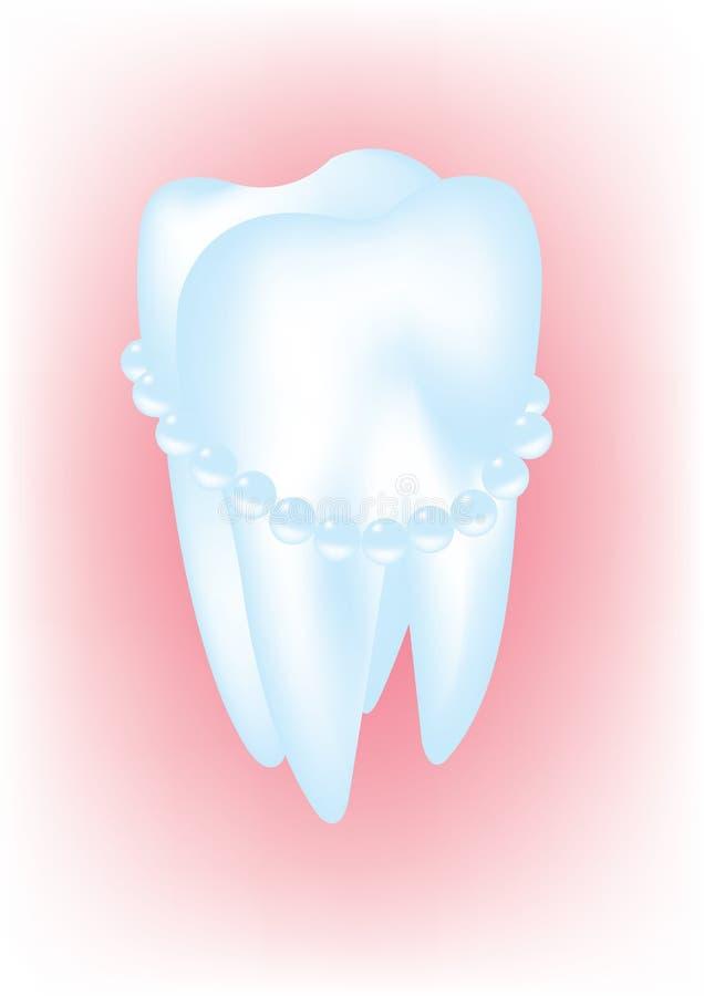 Tooth stock illustration