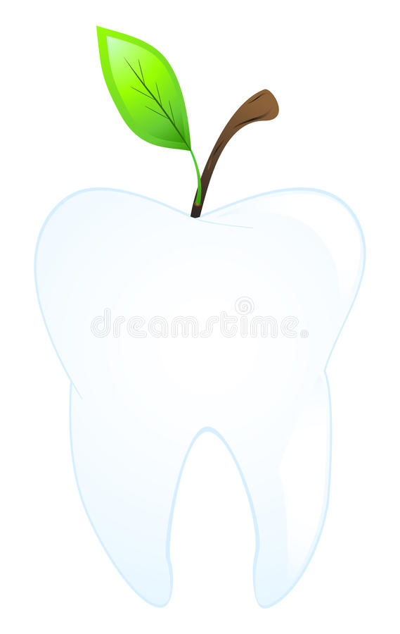 Download Tooth stock vector. Image of growth, healthcare, human - 14837882