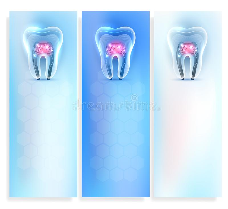 Tooth anatomy banner. Beautiful clean artistic transparent tooth anatomy templates set on a delicate clean blue background royalty free illustration