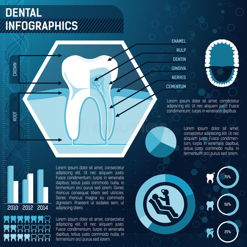 Tooth anatomy. Health and prevention template for design infographic royalty free illustration