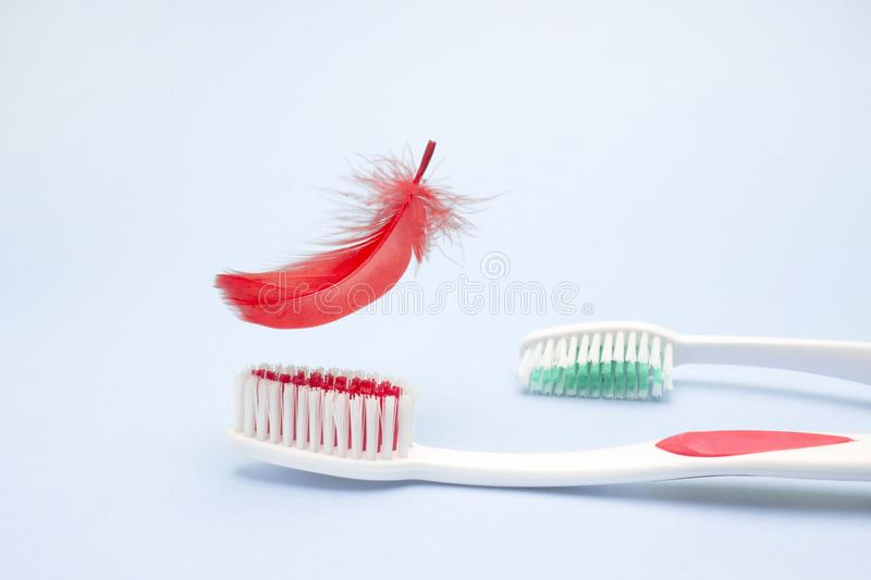 Tooth brushes and red feather. Periodontitis, bleeding gums, hygiene conception photo of periodontal disease. Dental care and toot. Tooth brushes and a feather stock photos